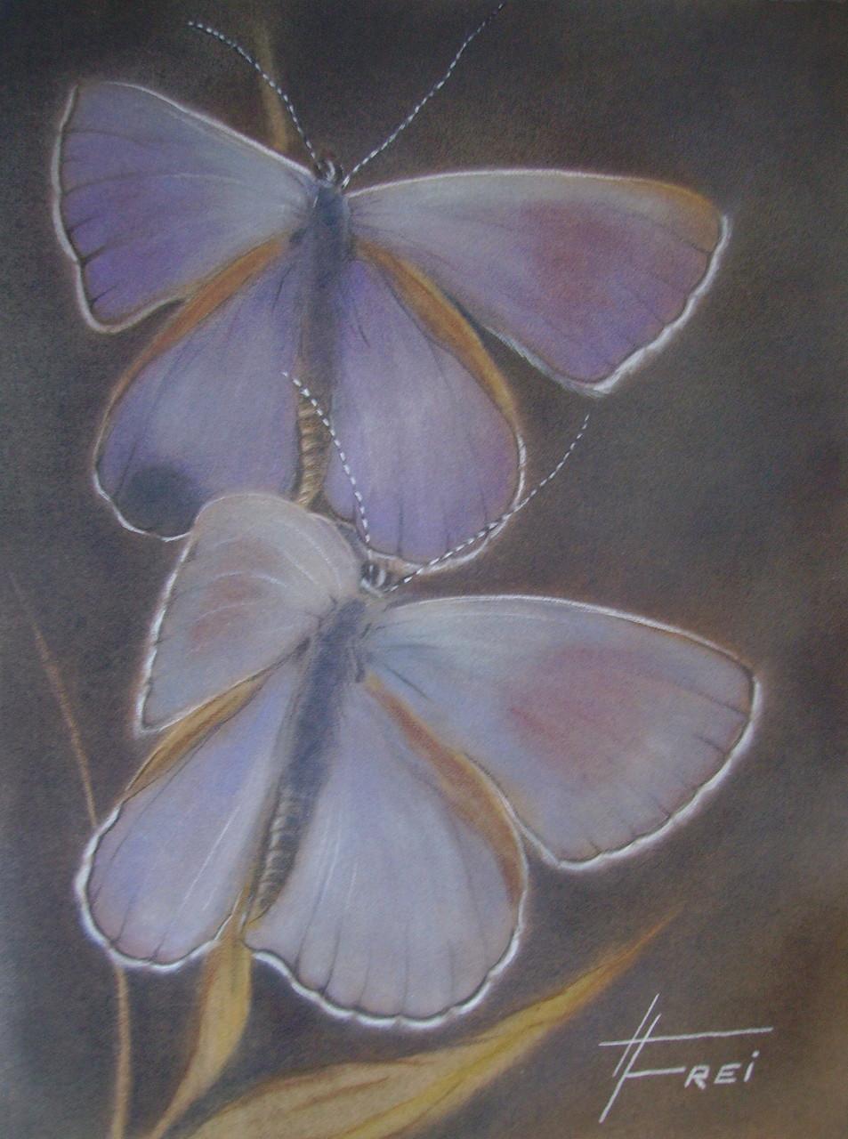 "ART HFrei - ""Butterfly"" - Pastell - 2006"