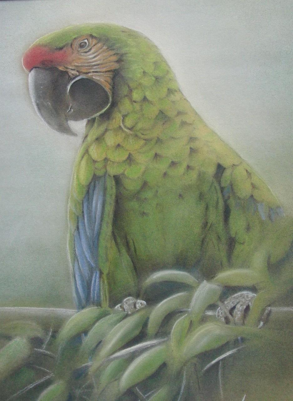 "ART HFrei - ""Grüner Ara"" - Pastell - 2006"
