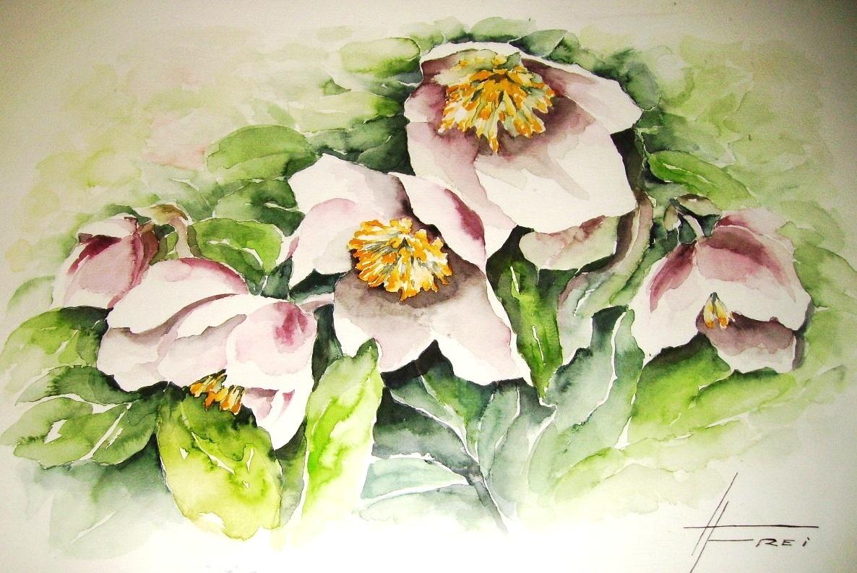 "ART HFrei - ""Schneerosen"" - Aquarell - 2005"