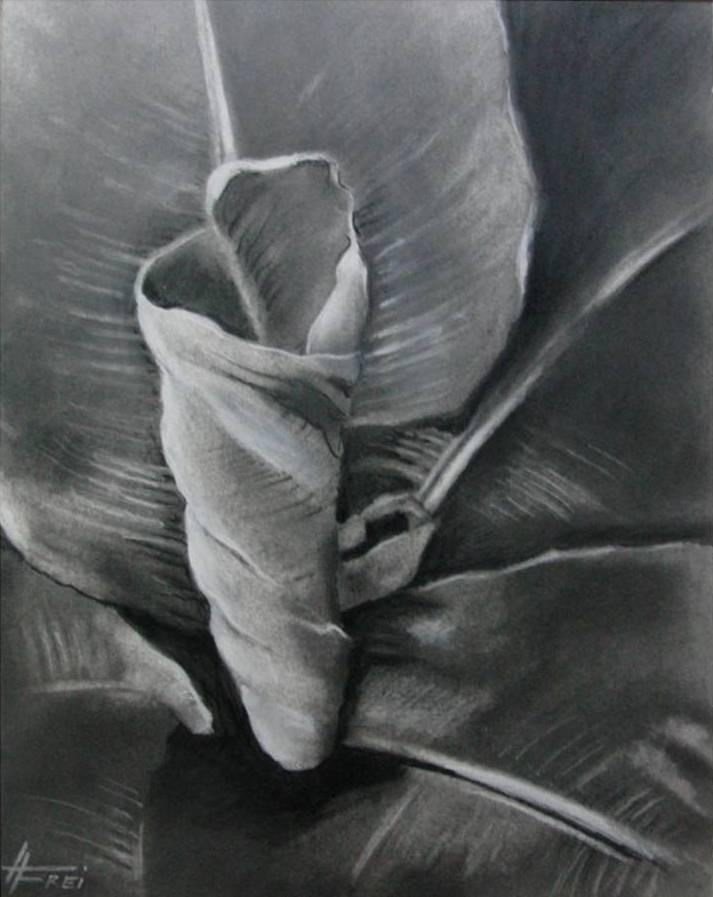 """ART HFrei - """"Bananenstrauch"""" - Naturkohle - 2013"""