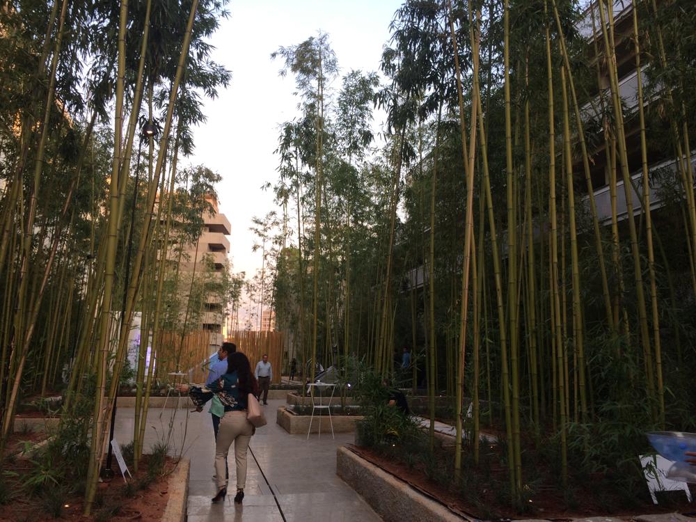 حديقة البامبو