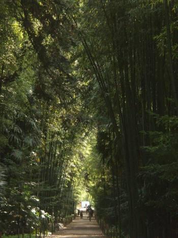 la Bambouseraie d'Anduze-Gard