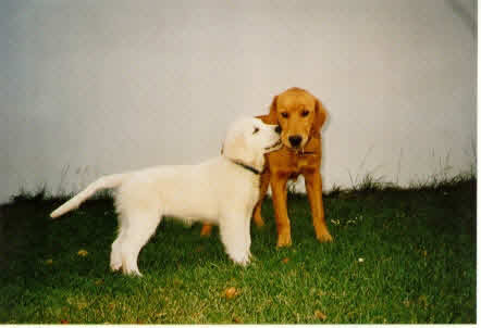 Jule und ihr Bodyguard Cody