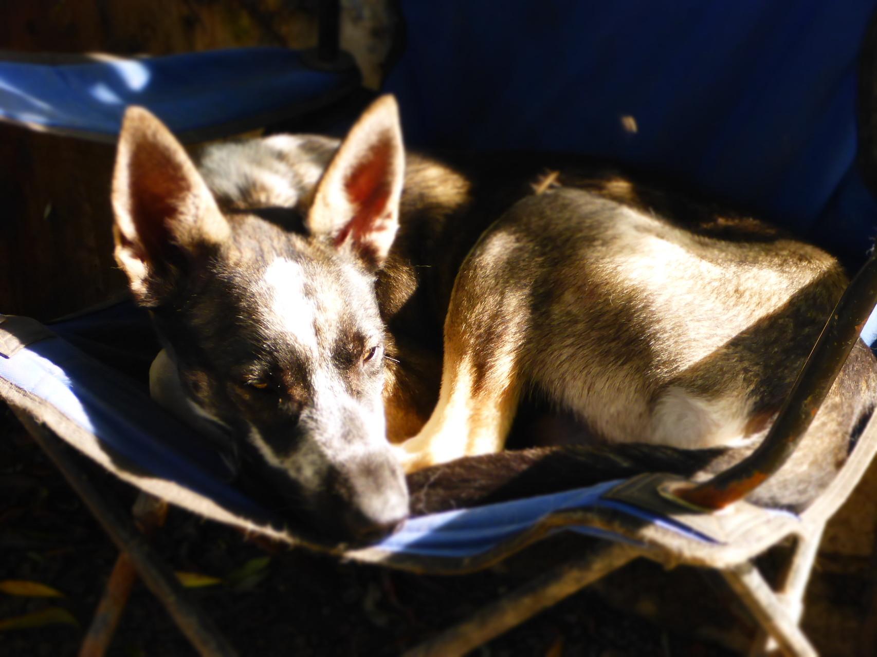 Auch Junghund Roros braucht mal ne Pause...
