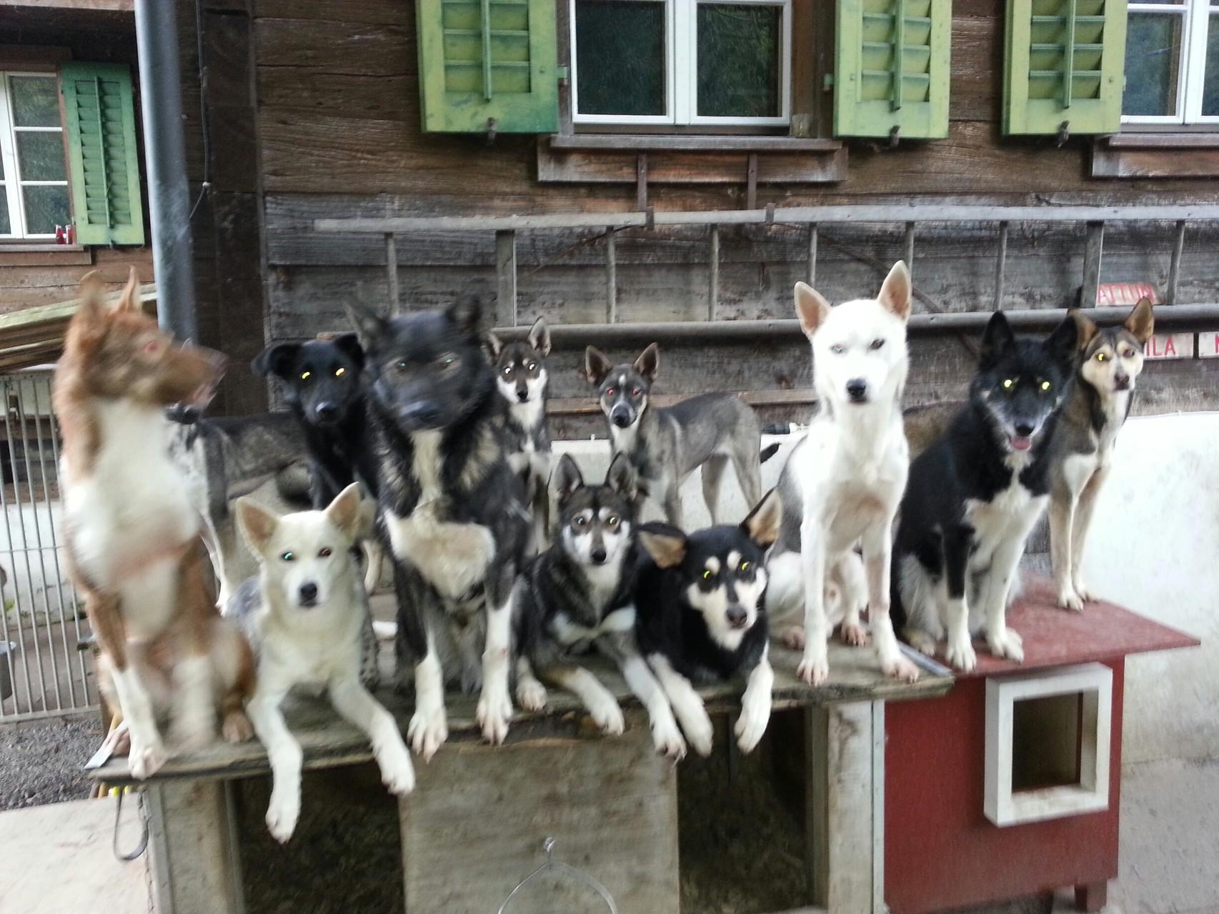 12 von 17 Hunden ;-)