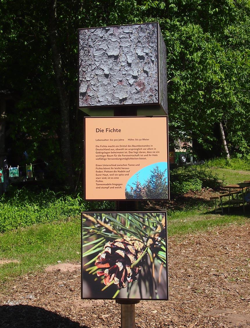 Drehwürfel zu heimischen Baumarten