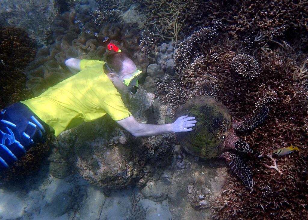 Meeresschildkröten zeigen keine Scheu vor den Menschen