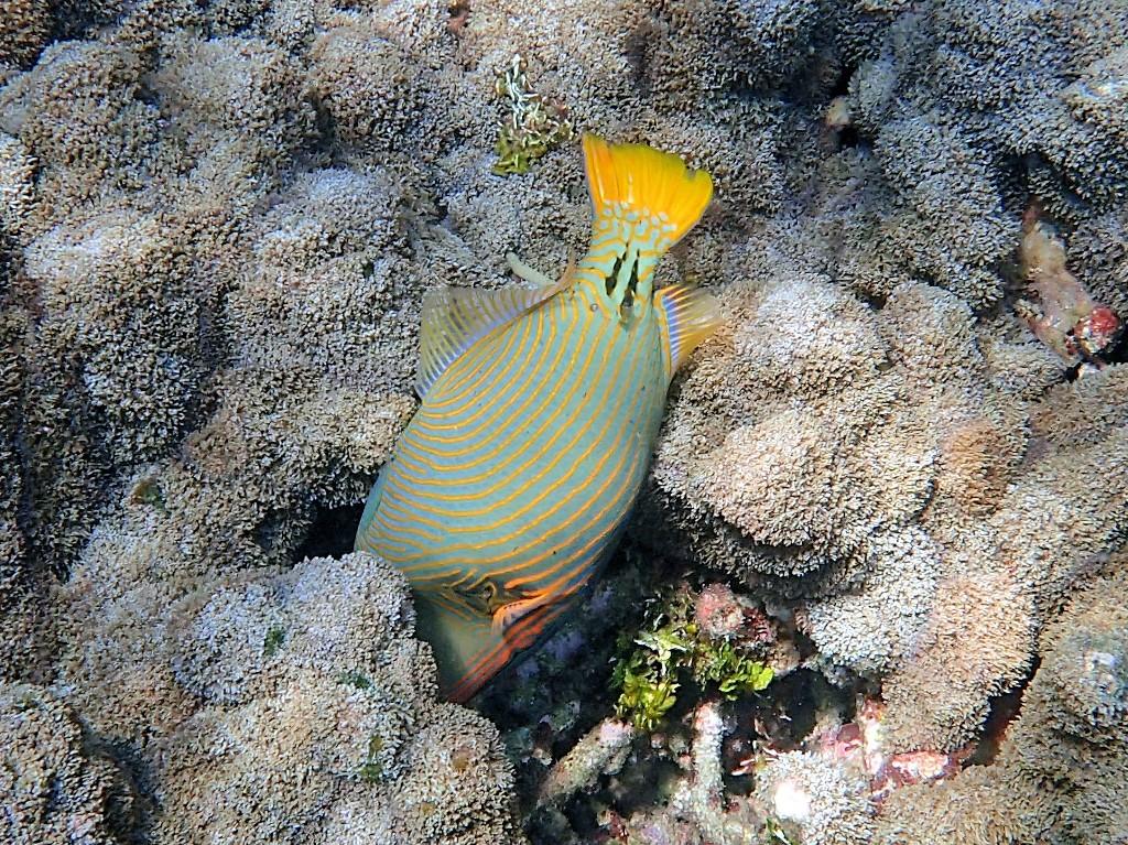 Korallen als Nahrungsquelle