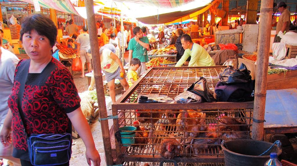 Lebend - Hühner warten auf ihren Schlachter