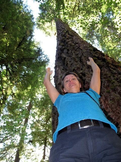 Regenwaldriesen - Höhen bis knapp 100 m sind möglich
