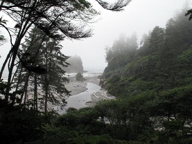 Nebelwald am Pazifik