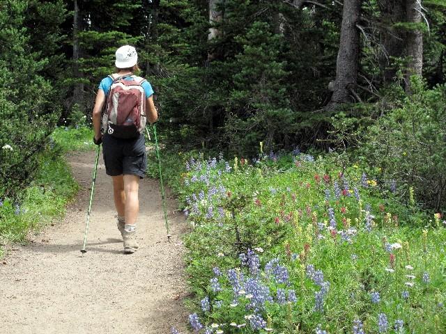 Farbenpracht - Bergblumenwiesen in großer Vielfalt