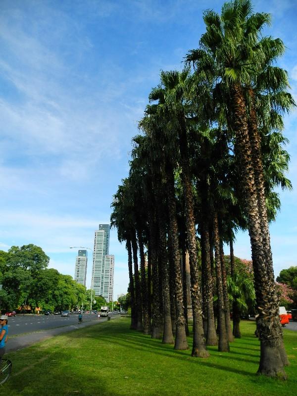 Aufgereiht - Palmen im subtropischen Buenos Aires