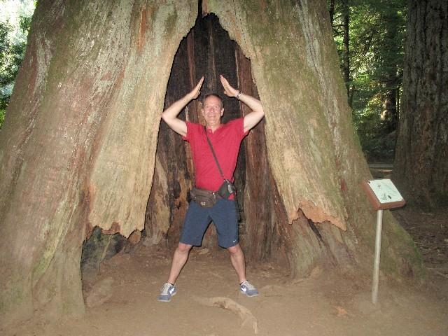 Noch standfest - Ausgehöhlter Baum im Regenwald