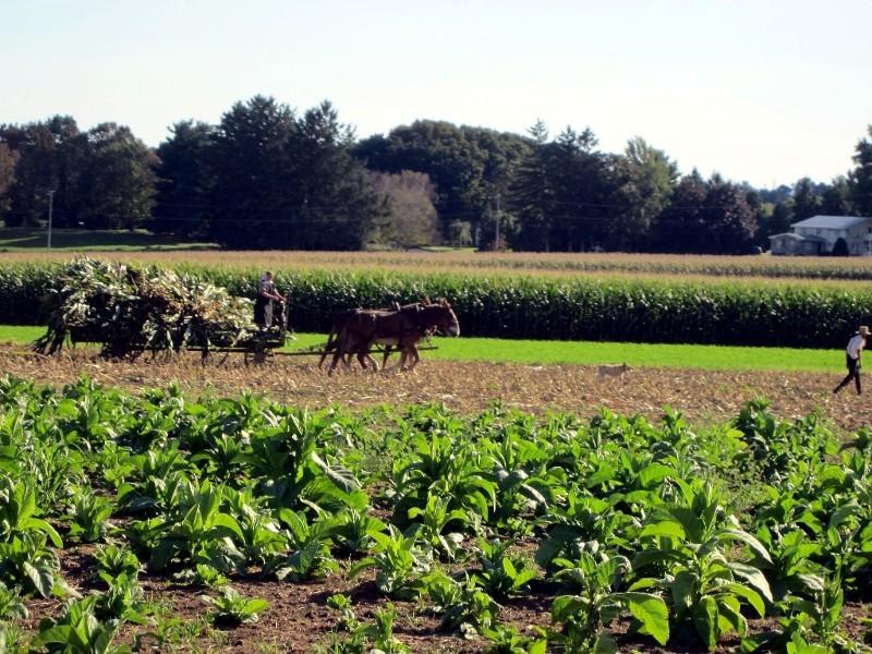 ... während auf den Feldern keine Maschinen eingesetzt werden ...