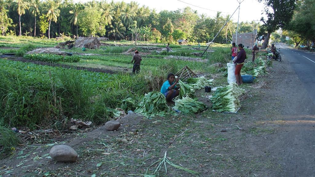 Subsistenz und mehr - Die kleien Felder ernähren Familien ...