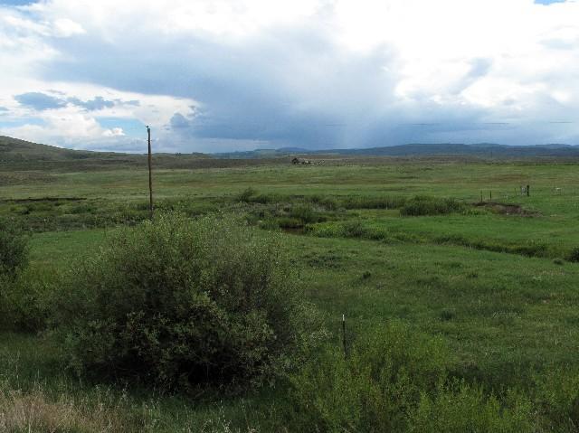 Grünes Weideland - Coloradohochplateau in rund 2000 m Höhe