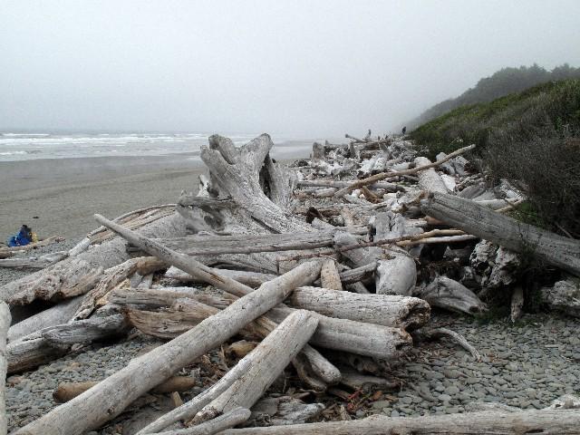 Kunstvoll - Treibholzansammlung an der pazifischen Nordwestküste