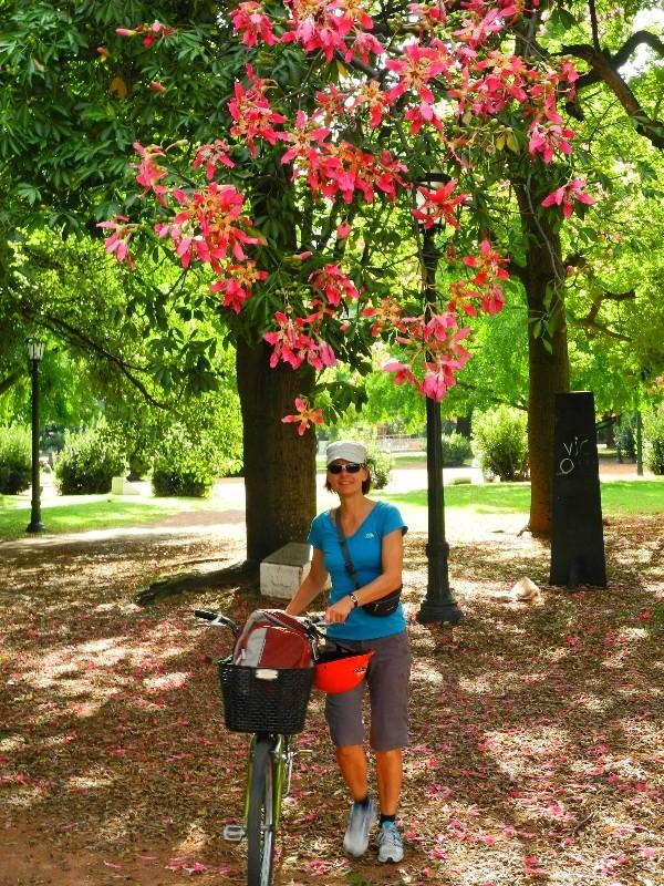 Wahrzeichen - Magnolien in einem Park in Buenos Aires