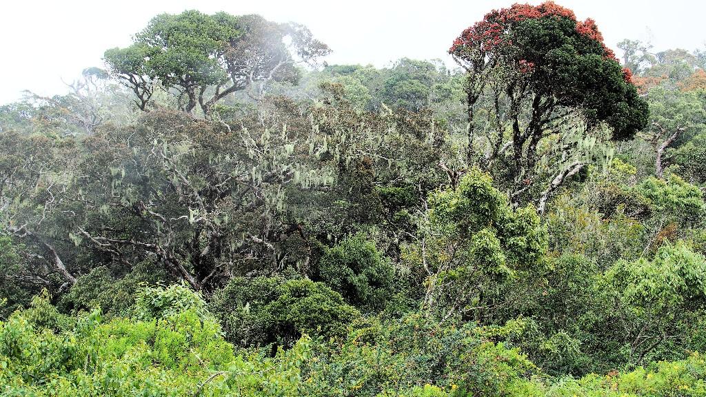 Blick auf den artenreichen Nebelwald auf rund 2100 m Höhe
