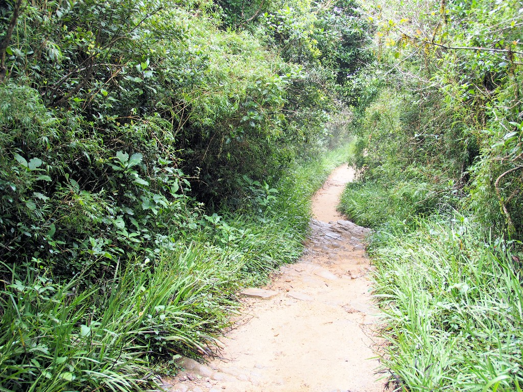 ... und Bergnebelwald prägen den Horton Plains Nationalpark