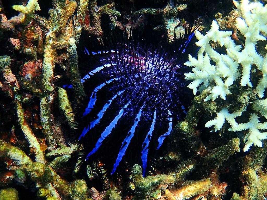 ... und imposante Korallen ...