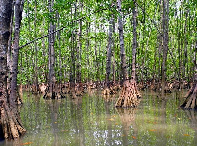 ...durch die Mangroven der Islas Damas...