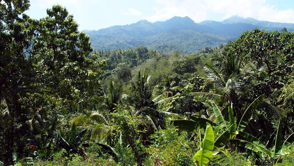 Auf unserer Rollertour sahen wir tropischen Feuchtwald, ...