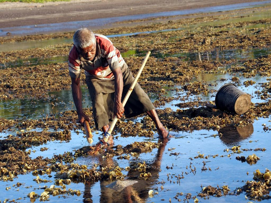 """Ebbe - Vor dem Beach des Budi Sun Resort sucht ein Dorfbewohner nach """"Meeresfrüchten""""."""