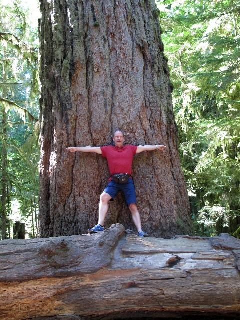 9 m Umfang - Douglas-Fichte in einem Regenwald auf Vancouver Island