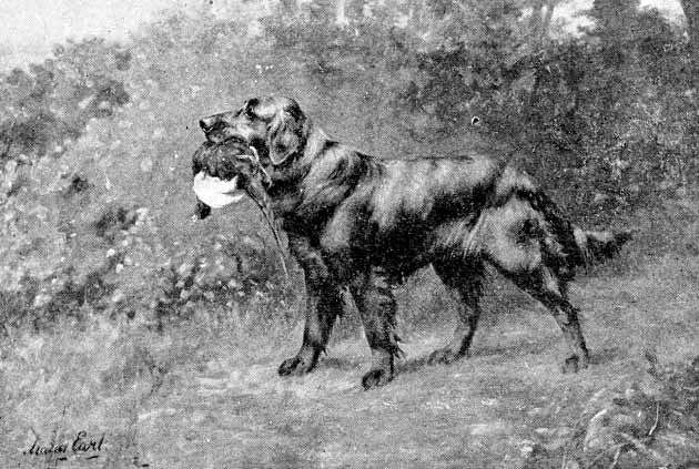 Flat Coated Retriever Gemälde (1892) - Künstler: Miss Maude Earl (Quelle: http://www.flatcoats.zimzala.co.za/flatcoated_history.html)