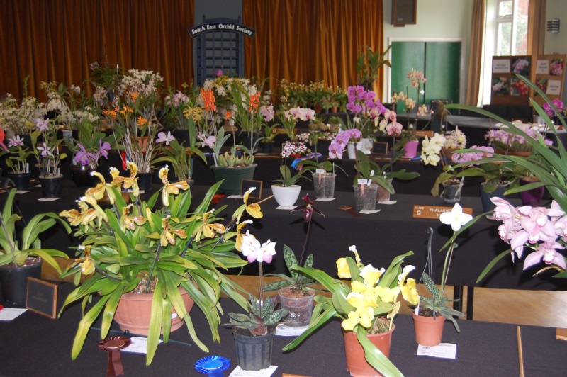 Autumn Show South East Orchid Society