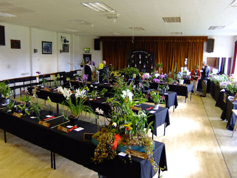 Spring Show South East Orchid Society 2013