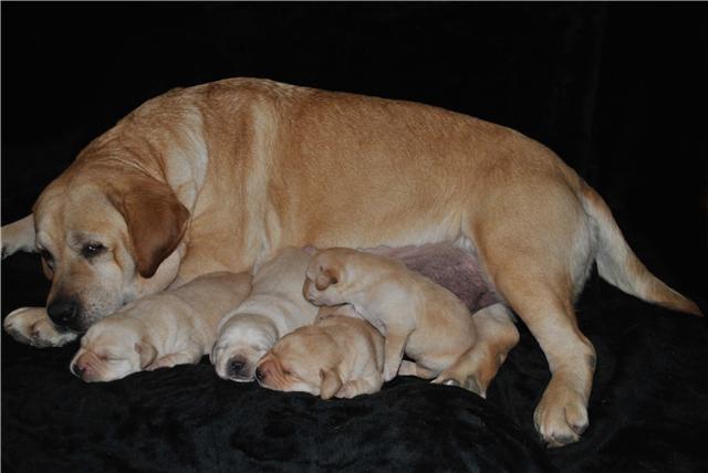 Lady Noah et ses bébés