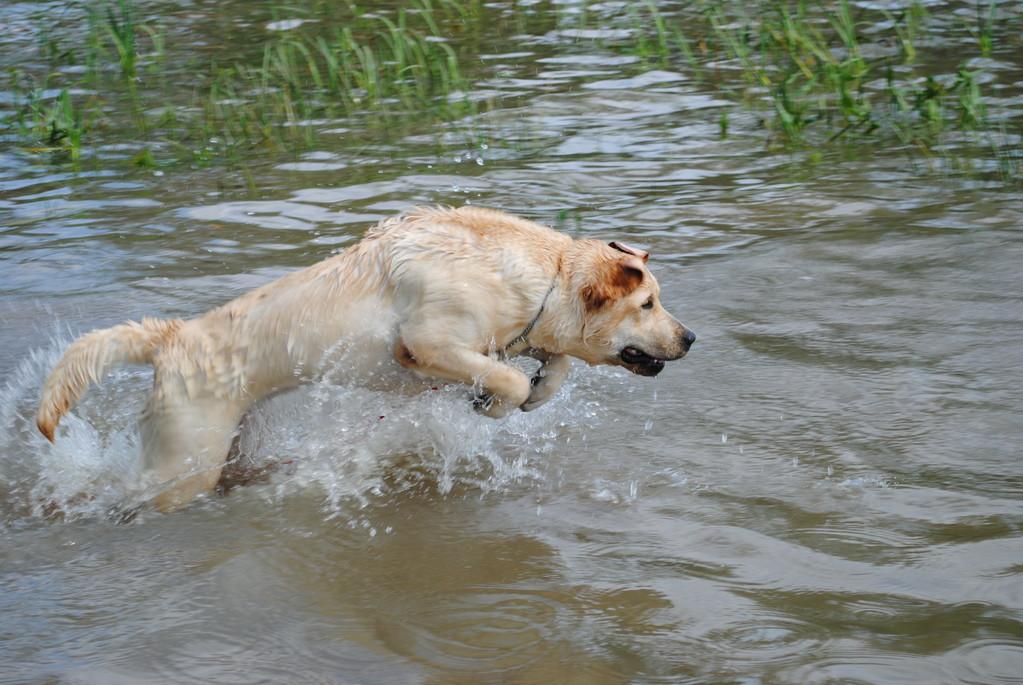 Athéna de Monpaq en pratique pour le rapport dans l'eau