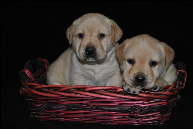 Mack et Ted
