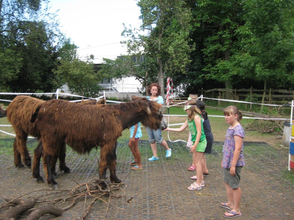 Den Eseln Hallo sagen und was über sie lernen...
