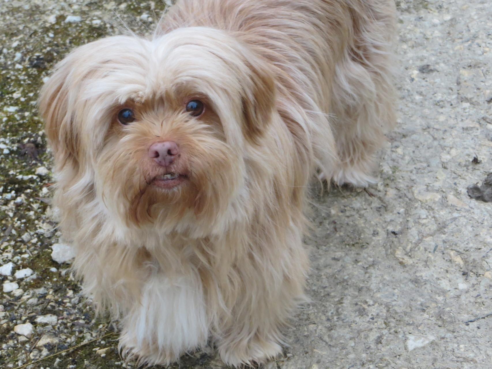 Unser geliebte Nanouk musste uns leider (+ 7. April 2015) verlassen. Sie hatte Krebs und hinterlässt eine Riesenlücke. Sie war ein ganz besonderer Hund, ein Clown auf vier Pfoten!