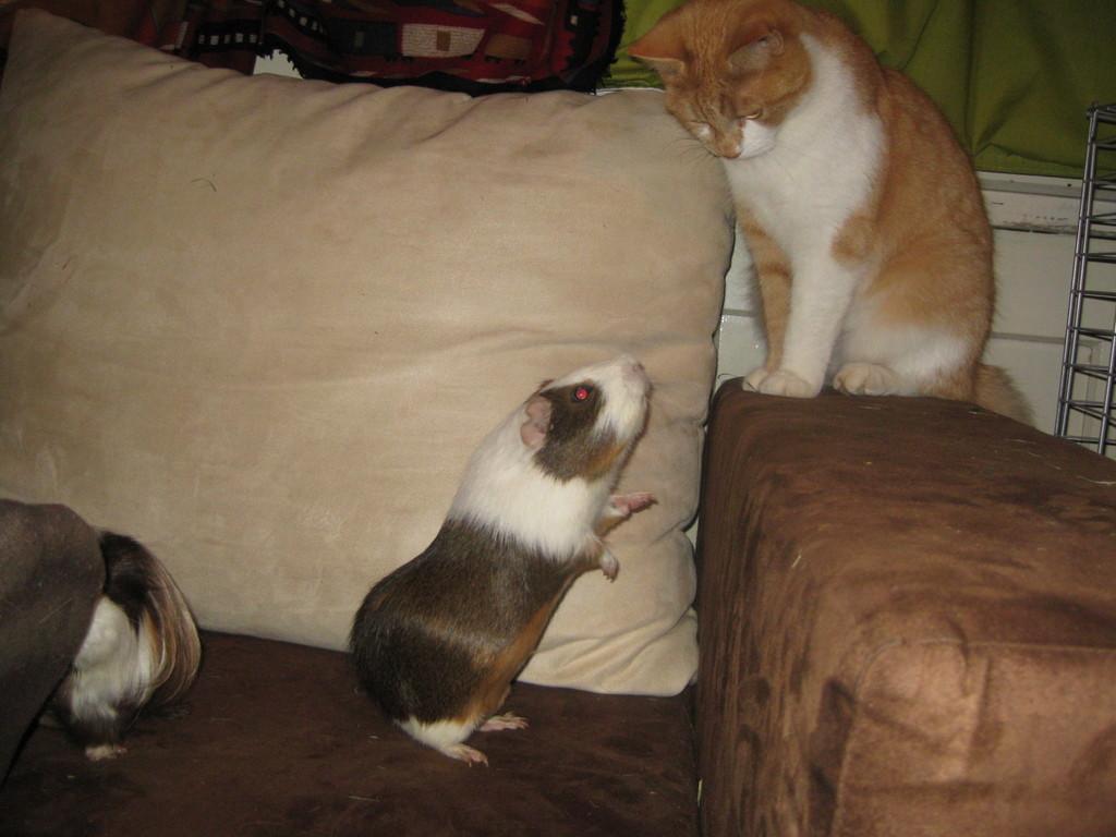 Da kommt Kater Gino doch recht klein raus gegen Rita!