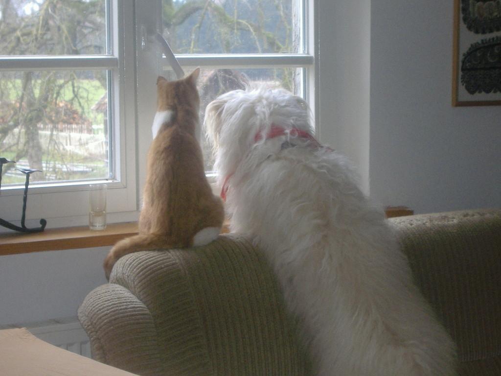 Was macht denn da der Nachbar?