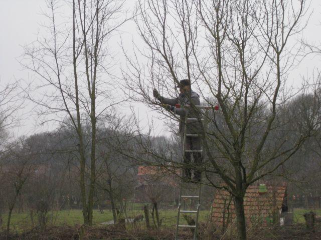 Obstbaumschnitt  - nicht ganz ungefährlich!