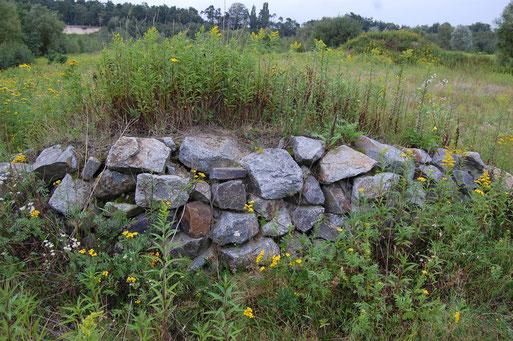 Trockenmauer - Lebensraum für viele Tiere