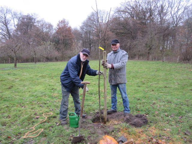 Siegfried Tilgner und Christoph Beck beim Obstbaum pflanzen