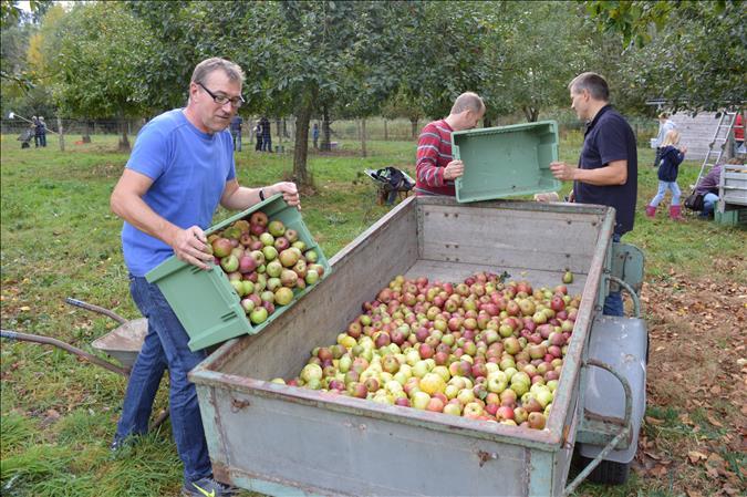 Apfelpflücken /  Umwelttag der Jungen Gemeinschaft