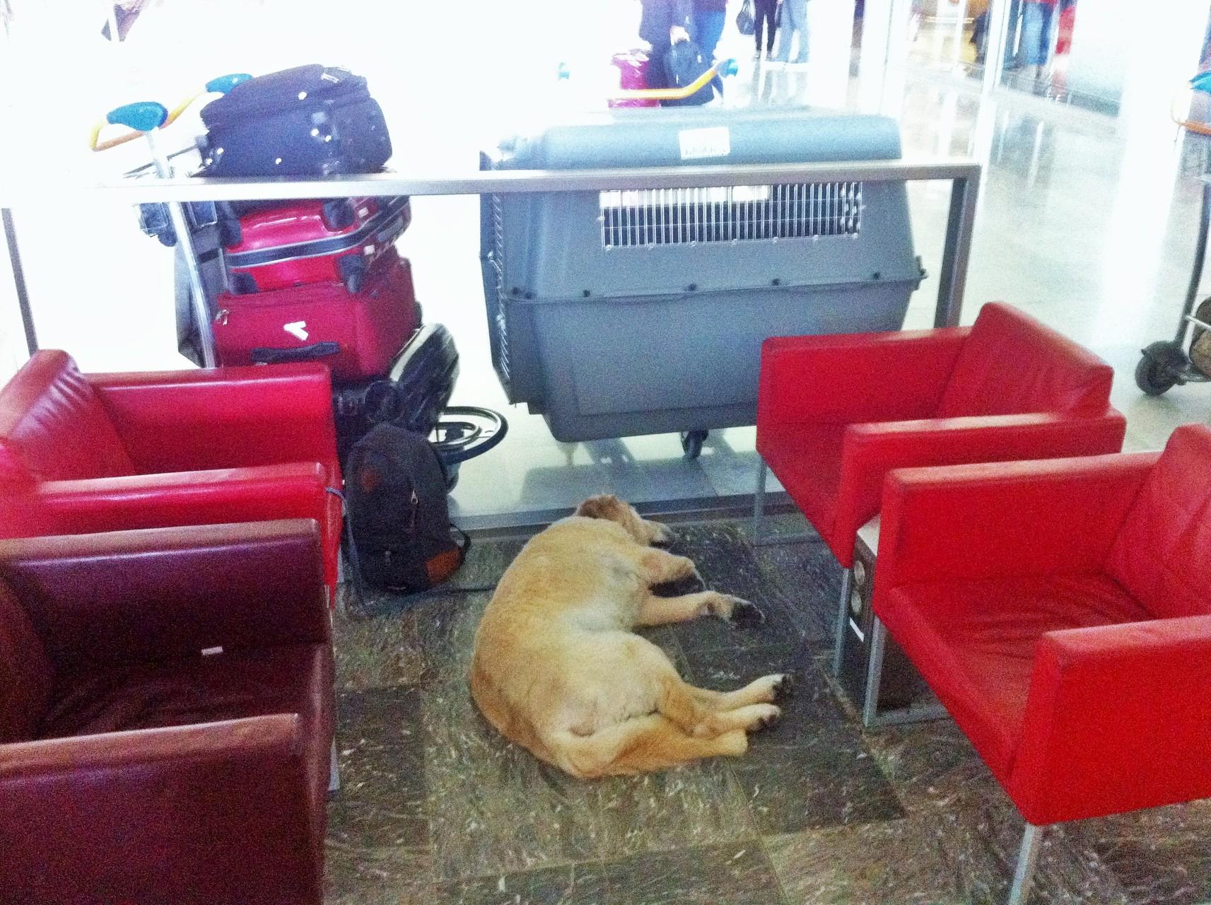 Bob patientant à l'aéroport.