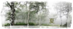 八千穂高原、白樺群生地