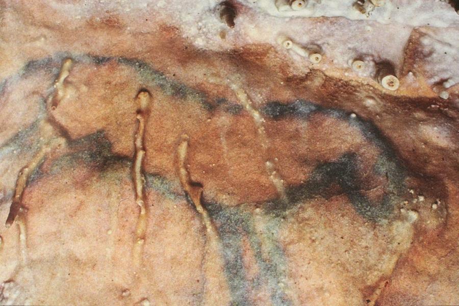 <h2>Le cheval bleu, emblême de la grotte de Villars</h2>
