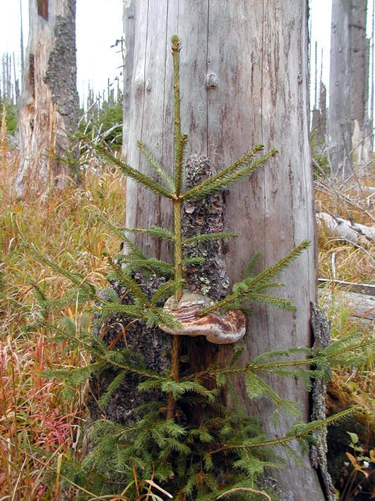 Nationalpark Bayerischer Wald: Raritätenkabinett des Waldes