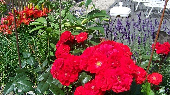 Haus Hildegard: Rosenbeet