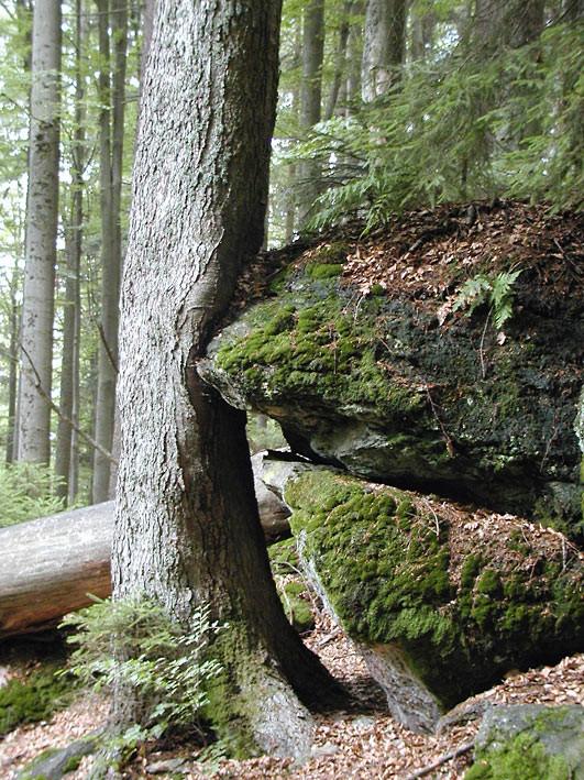 Nationalpark Bayerischer Wald: Felswandergebiet